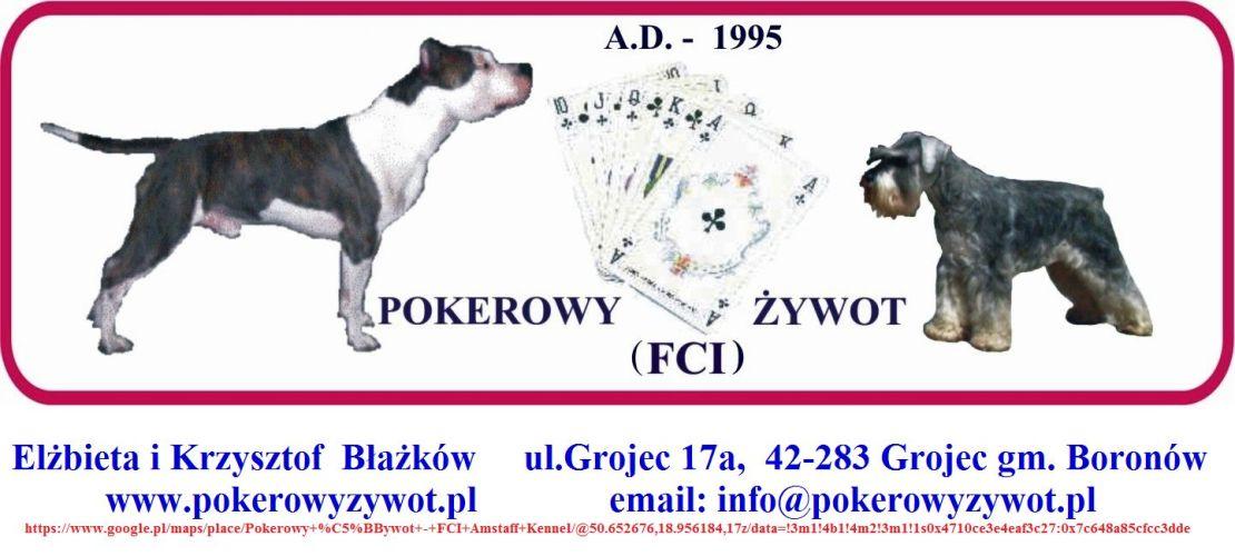 Pokerowy Żywot FCI